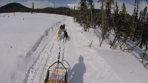 A mushers perspective....
